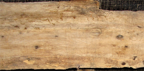 woodworm-in-timber