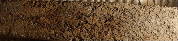 woodworm observations